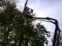 Elagages d'arbres